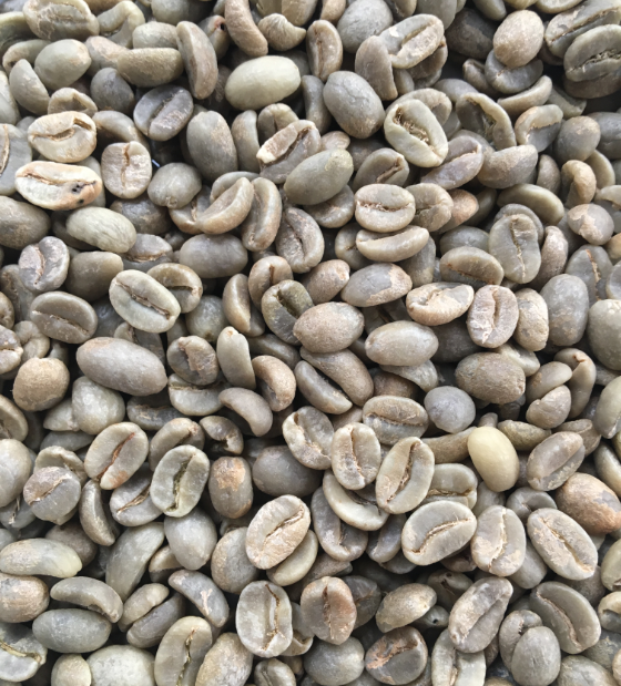 Unroasted Colombian Green Raw Coffee